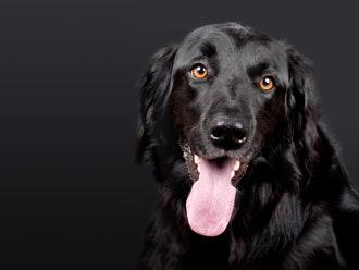 Az állatorvosi asszisztens tevékenységi körei